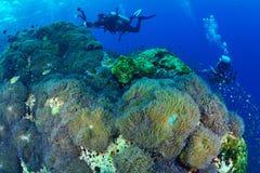 Όμορφη κοραλλιογενής ύφαλος στο εθνικό πάρκο Chumporn, Ταϊλάνδη Στοκ φωτογραφίες με δικαίωμα ελεύθερης χρήσης