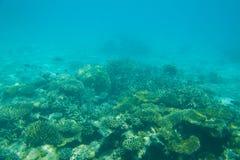 όμορφη κοραλλιογενής ύφ&alph Στοκ Εικόνα