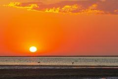 Όμορφη κόκκινη λιμνοθάλασσα ηλιοβασιλέματος και θάλασσας με τα φλαμίγκο στοκ φωτογραφία