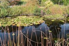Όμορφη λίμνη με τον κρίνο νερού σε έναν κήπο κάπου στο Neth Στοκ Εικόνες