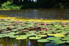 Όμορφη λίμνη στην Καμπότζη Ασία Στοκ φωτογραφίες με δικαίωμα ελεύθερης χρήσης