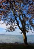 Όμορφη λίμνη Balaton Στοκ Εικόνες