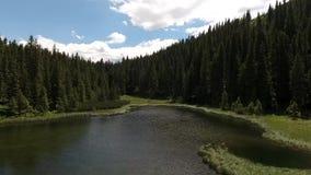 Όμορφη λίμνη Maricheika βουνών ουκρανικά Carpathians θερινό ηλιόλουστο swallowtail χλόης ημέρας πεταλούδων Ουκρανική φύση του όμο απόθεμα βίντεο