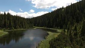 Όμορφη λίμνη Maricheika βουνών ουκρανικά Carpathians θερινό ηλιόλουστο swallowtail χλόης ημέρας πεταλούδων Ουκρανική φύση του όμο φιλμ μικρού μήκους