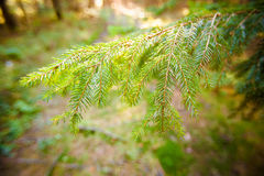 Όμορφη λεπτομέρεια φθινοπώρου FEM στοκ φωτογραφίες με δικαίωμα ελεύθερης χρήσης