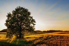 Όμορφη λετονική φύση στο ηλιοβασίλεμα στοκ φωτογραφία
