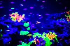 Όμορφη μέδουσα, medusa στο φως νέου με τα ψάρια Ενυδρείο με την μπλε μέδουσα και τα μέρη των ψαριών r στοκ εικόνες με δικαίωμα ελεύθερης χρήσης