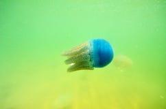 Όμορφη μέδουσα θάλασσας στη θάλασσα Στοκ Εικόνες