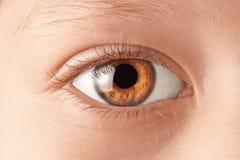 Όμορφη μακροεντολή ματιών στοκ εικόνα