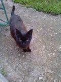 όμορφη μαύρη γάτα Στοκ εικόνα με δικαίωμα ελεύθερης χρήσης