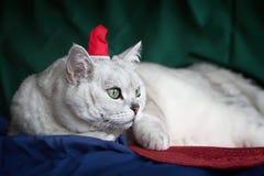 Όμορφη μεγάλη αξιοσέβαστη οκνηρή, ασημένια βρετανική γάτα με ευφυή, προσεκτικά μάτια στο κόκκινο καπέλο Χριστουγέννων, αστείο Στοκ Εικόνες