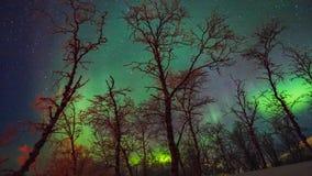 Όμορφη μετακίνηση της αυγής Borealis πέρα από τα δέντρα απόθεμα βίντεο