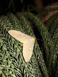 Όμορφη μύγα Στοκ εικόνα με δικαίωμα ελεύθερης χρήσης