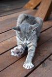Όμορφη νέα γάτα Στοκ Φωτογραφίες
