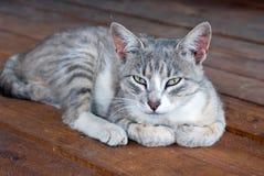 Όμορφη νέα γάτα Στοκ φωτογραφία με δικαίωμα ελεύθερης χρήσης