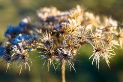 Όμορφη ξηρά μακροεντολή αφαίρεσης λουλουδιών Στοκ Φωτογραφίες