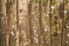 Όμορφη ξύλινη σύσταση Στοκ εικόνες με δικαίωμα ελεύθερης χρήσης