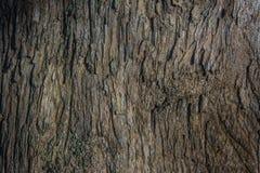 Όμορφη ξύλινη σύσταση, υπόβαθρο, δέρμα του φλοιού πεύκων, Ταϊλάνδη Στοκ φωτογραφία με δικαίωμα ελεύθερης χρήσης