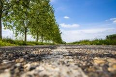 Όμορφη οδική γραμμή Closup σε Palic, Vojvodina, Σερβία το καλοκαίρι στοκ φωτογραφίες με δικαίωμα ελεύθερης χρήσης