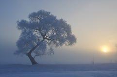 Όμορφη πάχνη και ανατολή Στοκ εικόνα με δικαίωμα ελεύθερης χρήσης