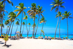 Όμορφη παραλία από το ξενοδοχείο Barcelo, Punta Cana Στοκ φωτογραφία με δικαίωμα ελεύθερης χρήσης