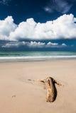 Όμορφη παραλία και σκούρο μπλε ουρανός Στοκ Εικόνα