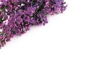 όμορφη πασχαλιά Στοκ Εικόνες