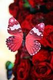 Όμορφη πεταλούδα και κόκκινα τριαντάφυλλα Στοκ εικόνες με δικαίωμα ελεύθερης χρήσης