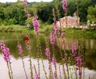 Όμορφη πεταλούδα μοναρχών στο λουλούδι μπροστά από το lakehouse στοκ φωτογραφίες με δικαίωμα ελεύθερης χρήσης
