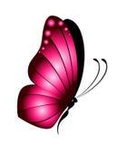 όμορφη πεταλούδα διανυσματική απεικόνιση