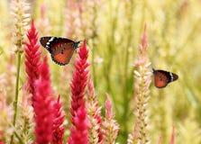 Όμορφη πεταλούδα μοναρχών στα λουλούδια θερινής χλόης Στοκ Εικόνες