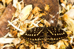 όμορφη πεταλούδα τροπική Στοκ εικόνες με δικαίωμα ελεύθερης χρήσης