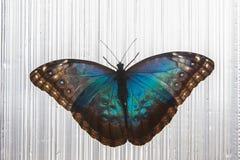 όμορφη πεταλούδα τροπική Στοκ φωτογραφίες με δικαίωμα ελεύθερης χρήσης