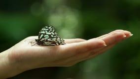 Όμορφη πεταλούδα υπό εξέταση φιλμ μικρού μήκους