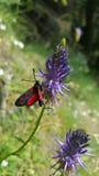 Όμορφη πεταλούδα στοκ εικόνα με δικαίωμα ελεύθερης χρήσης