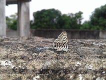 Όμορφη πεταλούδα Στοκ φωτογραφίες με δικαίωμα ελεύθερης χρήσης
