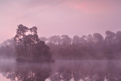 Όμορφη πορφυρή ανατολή στην άγρια λίμνη Στοκ εικόνες με δικαίωμα ελεύθερης χρήσης