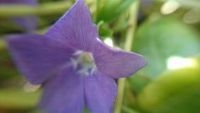 Όμορφη πορφυρή μακρο φωτογραφία λουλουδιών Στοκ φωτογραφία με δικαίωμα ελεύθερης χρήσης