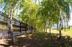Όμορφη πράσινη αλέα σημύδων στην ηλιόλουστη ημέρα Στοκ εικόνες με δικαίωμα ελεύθερης χρήσης