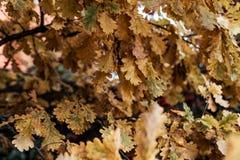 Όμορφη πράσινη μπουλέττα φύλλων φθινοπώρου υποβάθρου φύλλων από το δέντρο φύλλο φίλων πτώσης φθινοπώρου κάτω από το καιρικό δάσος Στοκ Εικόνες