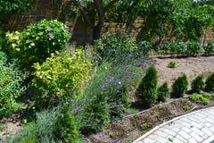 Όμορφη πρασινάδα στο θερινό κήπο στοκ φωτογραφίες με δικαίωμα ελεύθερης χρήσης