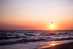 Όμορφη πτήση seagulls στο ηλιοβασίλεμα πέρα από τη θάλασσα Στοκ Φωτογραφία
