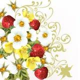 Όμορφη ρεαλιστική φράουλα με τα λουλούδια Στοκ φωτογραφίες με δικαίωμα ελεύθερης χρήσης