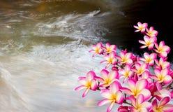 Όμορφη ρόδινη ρύθμιση δεσμών plumeria ή frangipani στο cryst Στοκ φωτογραφία με δικαίωμα ελεύθερης χρήσης