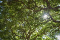 Όμορφη σήραγγα δέντρων Στοκ φωτογραφία με δικαίωμα ελεύθερης χρήσης