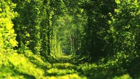 Όμορφη σήραγγα των πράσινων δέντρων Σήραγγα της αγάπης απόθεμα βίντεο