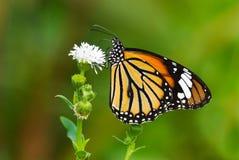 όμορφη σειρά πεταλούδων Στοκ Εικόνα
