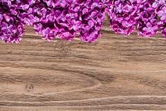 Όμορφη σειρά των φρέσκων ιωδών ιωδών λουλουδιών στην κορυφή του ξύλινου πίνακα στοκ φωτογραφία με δικαίωμα ελεύθερης χρήσης