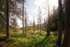 Όμορφη σκηνή θερινών τοπίων στη λίμνη Στοκ εικόνες με δικαίωμα ελεύθερης χρήσης
