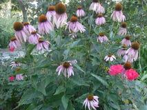 Όμορφη σκηνή λουλουδιών Στοκ φωτογραφία με δικαίωμα ελεύθερης χρήσης